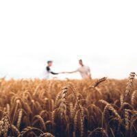 Tutelar e promover o trabalho rural digno: para uma sociedade mais inclusiva
